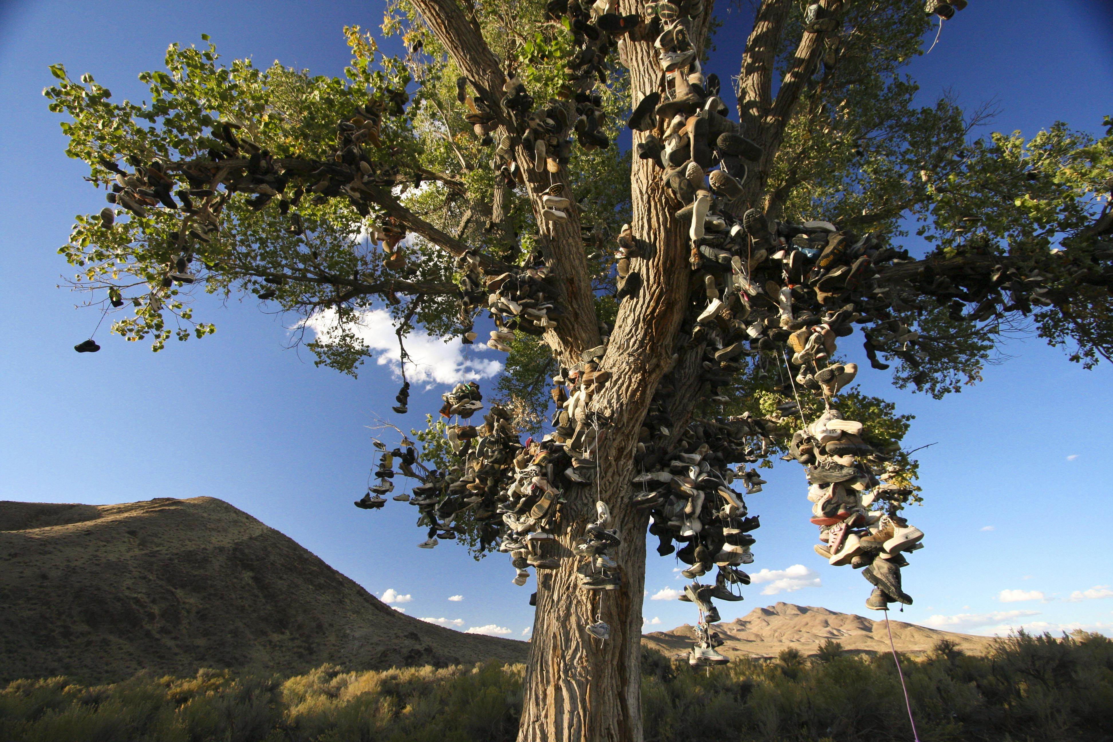Tree Shoes Nevada Shoe Tree is Beyond me
