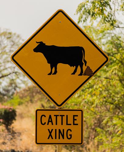 Cattle Crossing 2