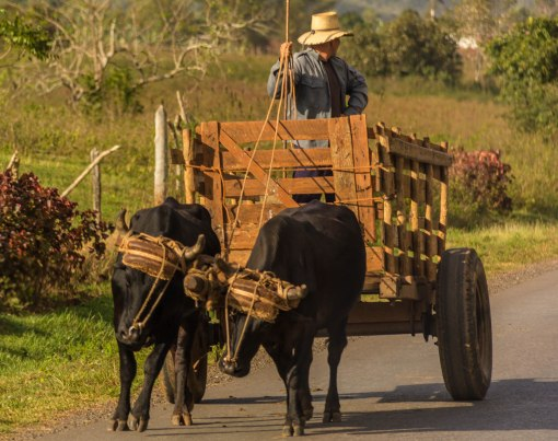 Oxcart 2