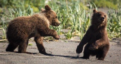 cubs on beach