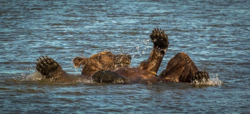 bathing bear 2