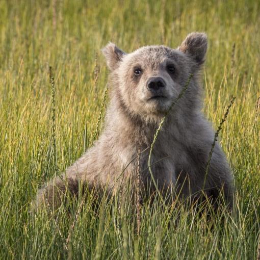 cub meadow