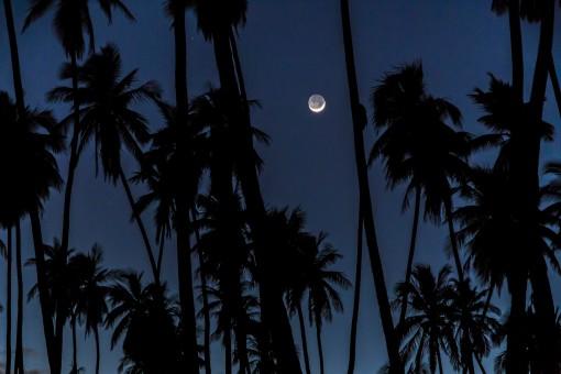 Moon Over Palm Grove