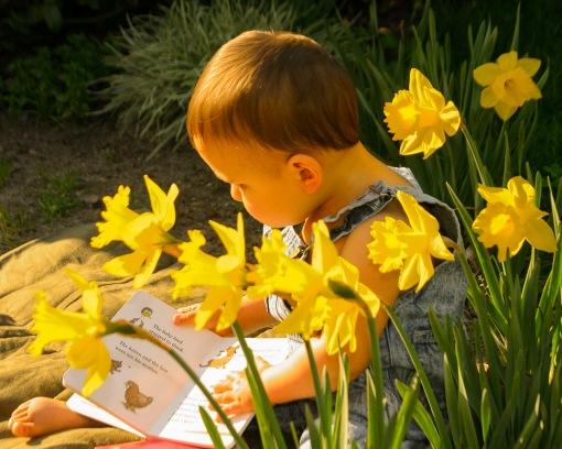 Baby Among  Daffodils