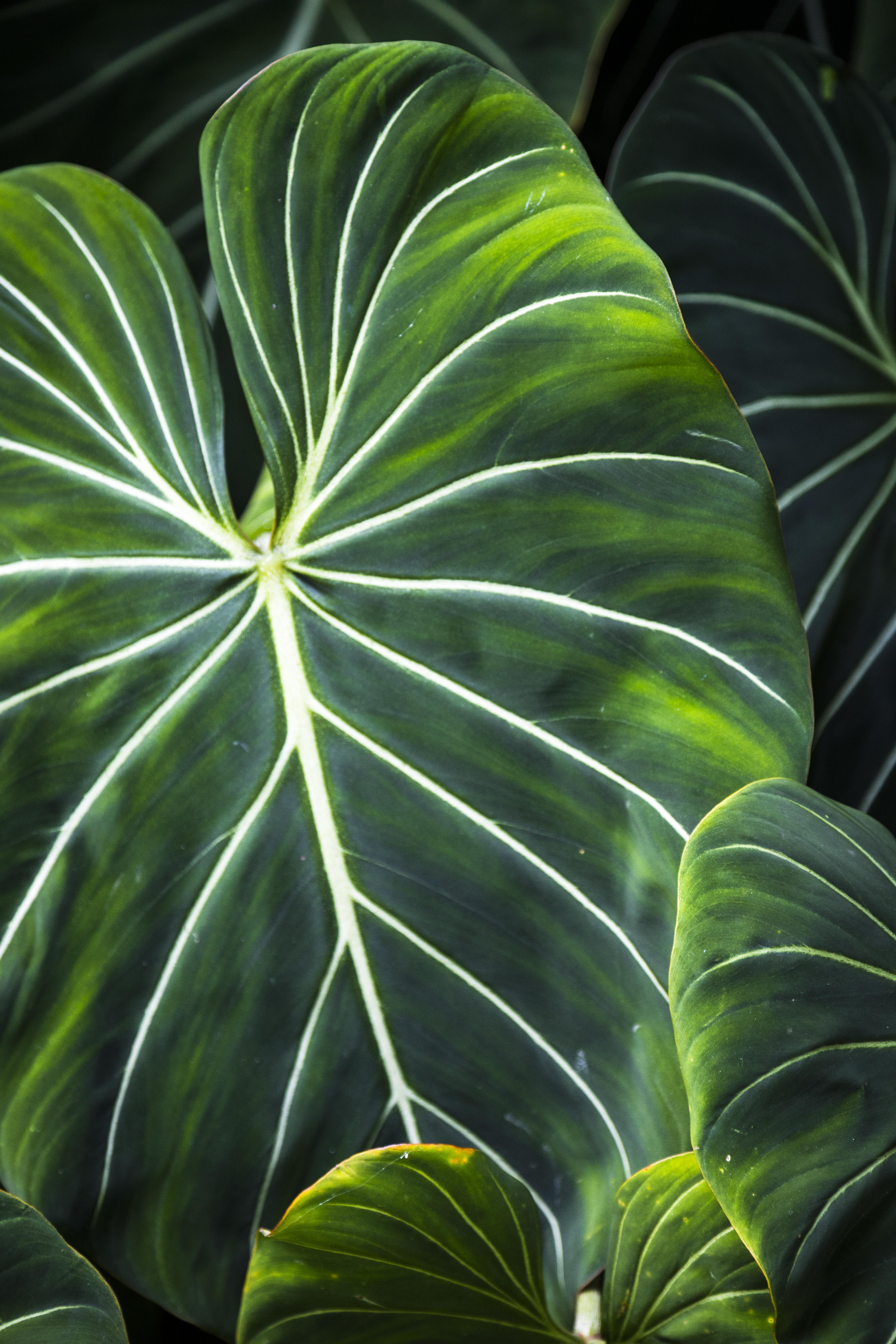 uber leaf rprtphoto