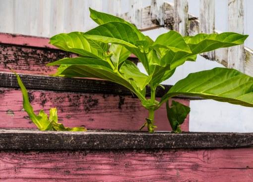 Plant on Pink Steps
