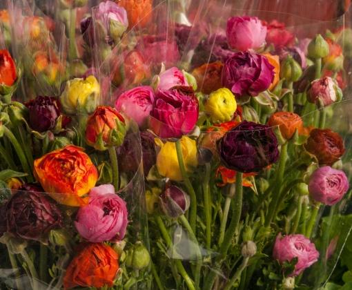 Peony Bouquets 2