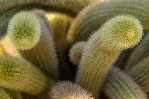 cactus branches